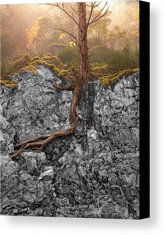 Tree Canvas Print featuring the photograph Taproot by Mary Jo Allen