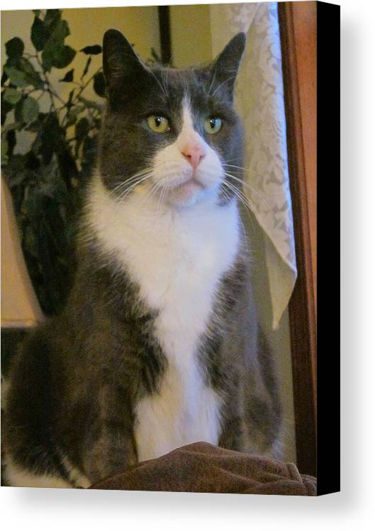 Guy Ricketts Photography Canvas Print featuring the photograph The Serious Side Of Morty by Guy Ricketts