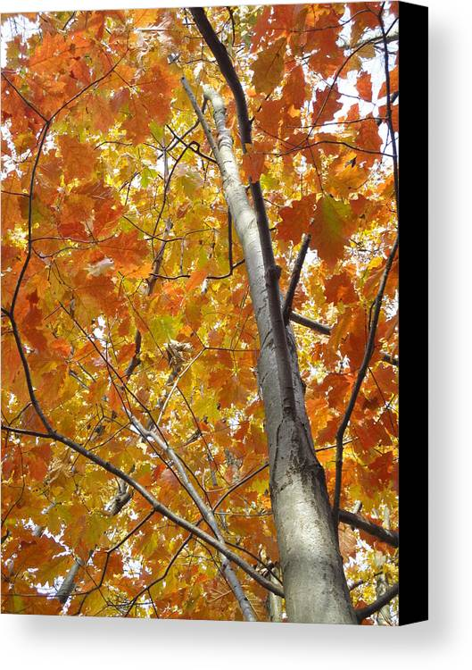 Guy Ricketts Photography Canvas Print featuring the photograph Tree Of Orange by Guy Ricketts