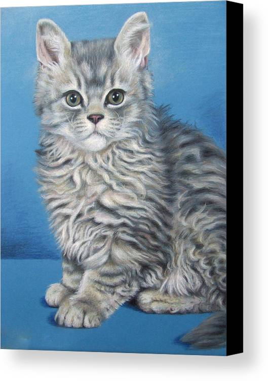 Cat Canvas Print featuring the drawing Velvet Kitten by Nicole Zeug