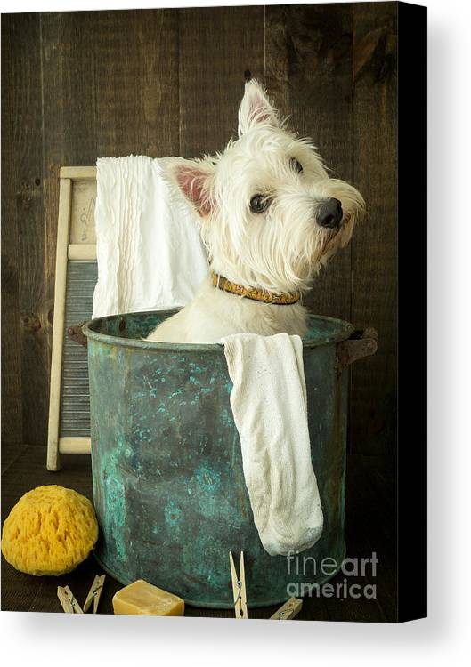 Dog Canvas Print featuring the photograph Wash Day by Edward Fielding