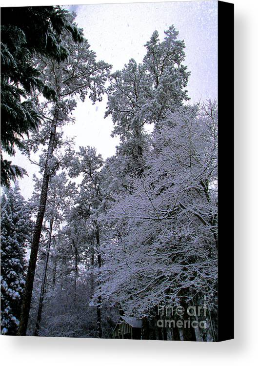 Winter Canvas Print featuring the photograph Winter Surprise by Silvie Kendall
