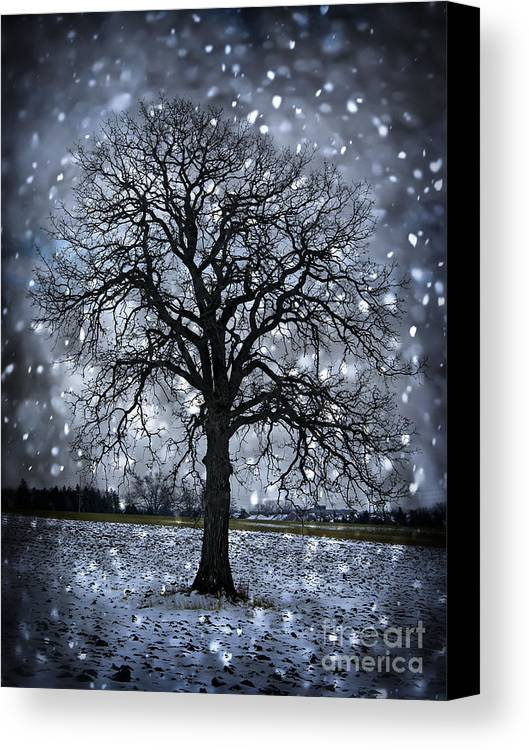 Lonely Canvas Print featuring the photograph Winter Tree In Snowfall by Elena Elisseeva