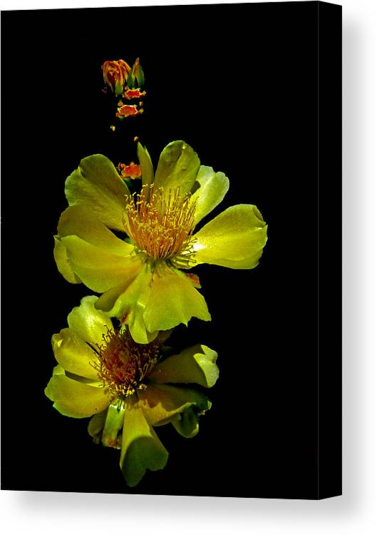 Yellow Cactus Flower Canvas Print featuring the photograph Yellow Cactus Flowers And Buds by Susan Duda