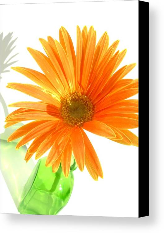 Gerbera Photographs Canvas Print featuring the photograph 2107c-001 by Kimberlie Gerner