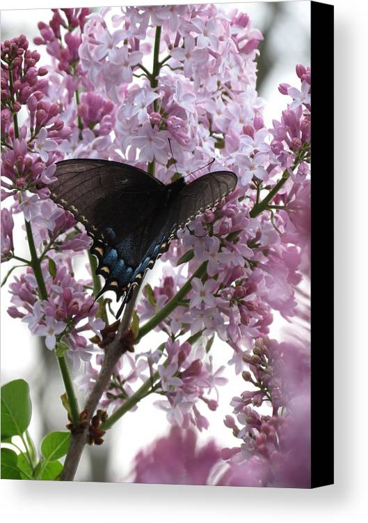 Swallowtail Canvas Print featuring the photograph Butterfly by Rebecca Overton