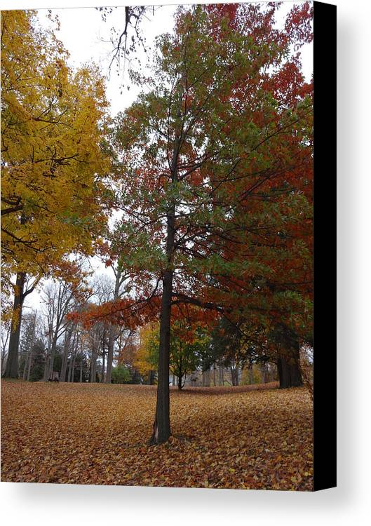 Fall Canvas Print featuring the photograph Death And Beauty by Nirel Jefferson