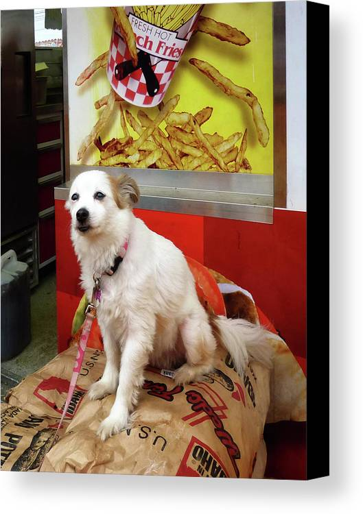 Dog Canvas Print featuring the photograph Dog At Carnival by Susan Savad