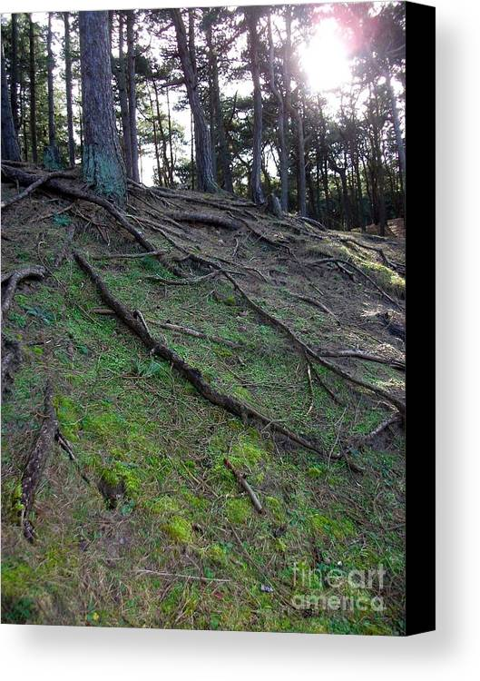 Exposed Roots Photograph Canvas Print featuring the photograph Exposed Roots by Helen Esdaile