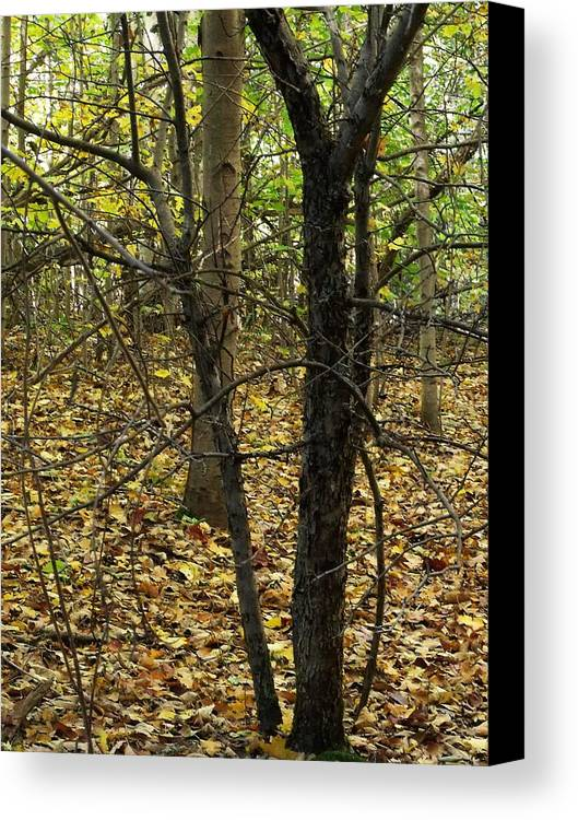 Photograph Canvas Print featuring the photograph Fall Colors by Dottie Gillespie