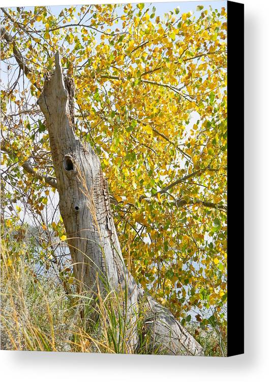 Tree Canvas Print featuring the photograph Fall Foliage by Brandy Fenenga