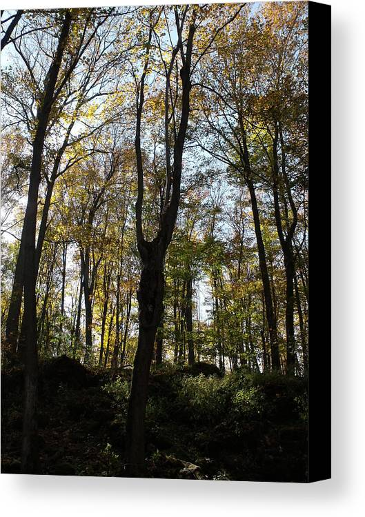 Photograph Canvas Print featuring the photograph Fall Trees by Dottie Gillespie