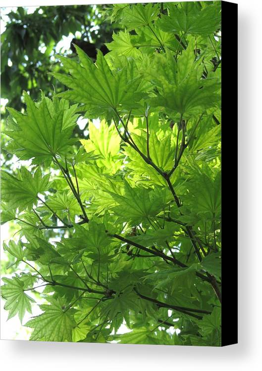 Tree Canvas Print featuring the photograph Foliage Tree by Rebecca Overton