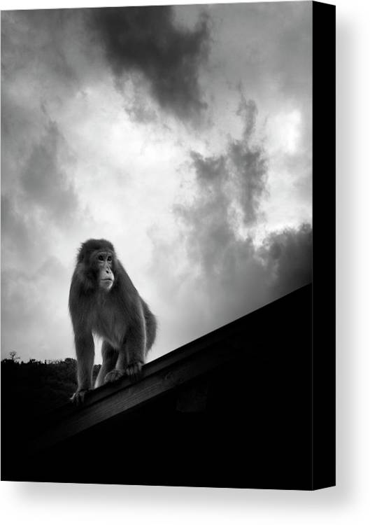Vertical Canvas Print featuring the photograph Japanese Macaque On Roof by By Daniel Franco