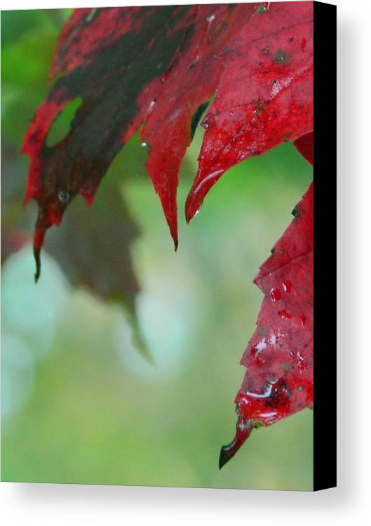 Shadow Canvas Print featuring the photograph Leaf Shadows by Mandi Howard