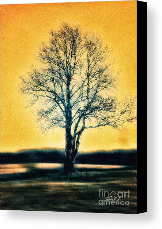 Photo Canvas Print featuring the photograph Leafless Tree by Jutta Maria Pusl