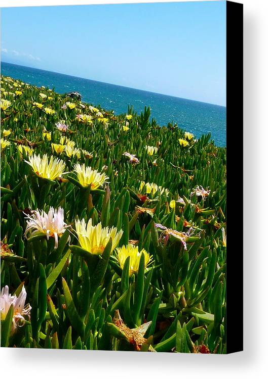 Water Canvas Print featuring the photograph Nature's Succulents by Debbie Johansson