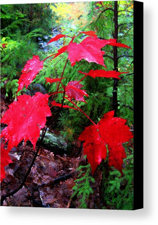 Red Canvas Print featuring the photograph Red Leaves by Wayne Toutaint