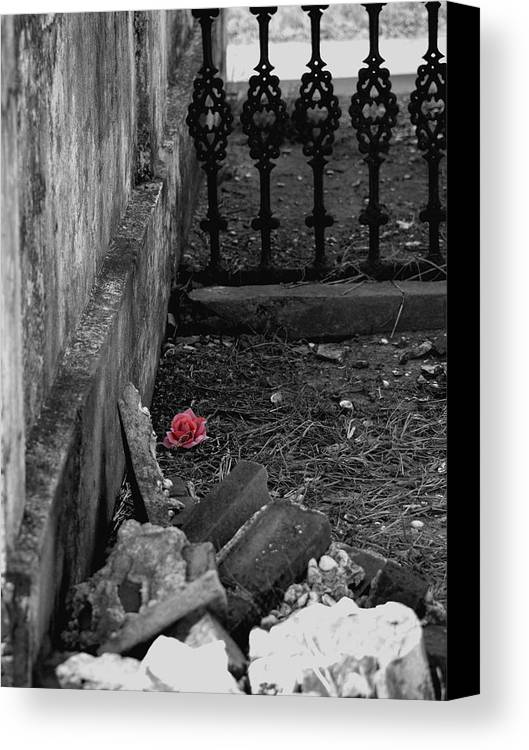 Rose Canvas Print featuring the photograph Solitary Rose by Renee Barnes