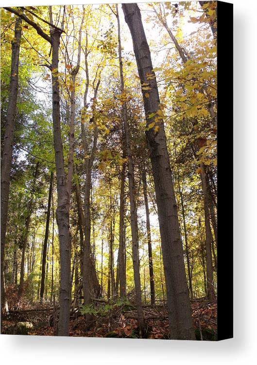 Photograph Canvas Print featuring the photograph Tall Fall Trees by Dottie Gillespie