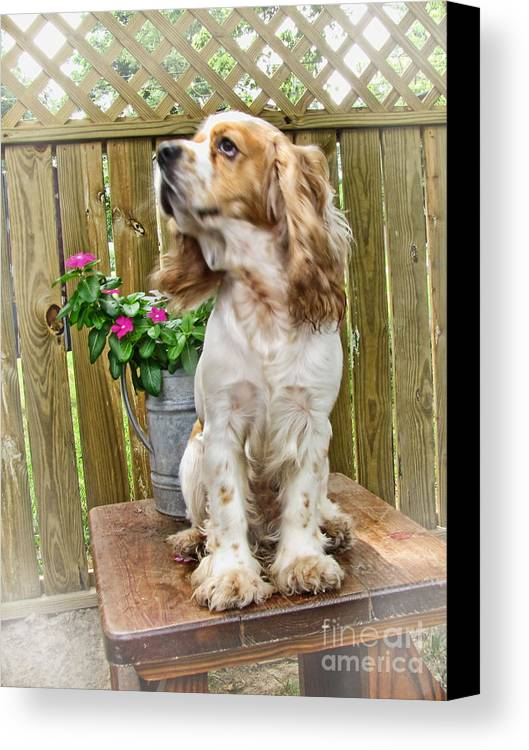 Animals Canvas Print featuring the photograph The Model by Debbie Portwood