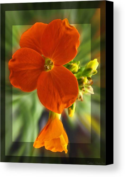 Nature Canvas Print featuring the photograph Tiny Orange Flower by Debbie Portwood