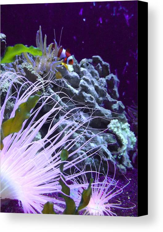 Underwater Canvas Print featuring the photograph Undersea World by Robin Hewitt