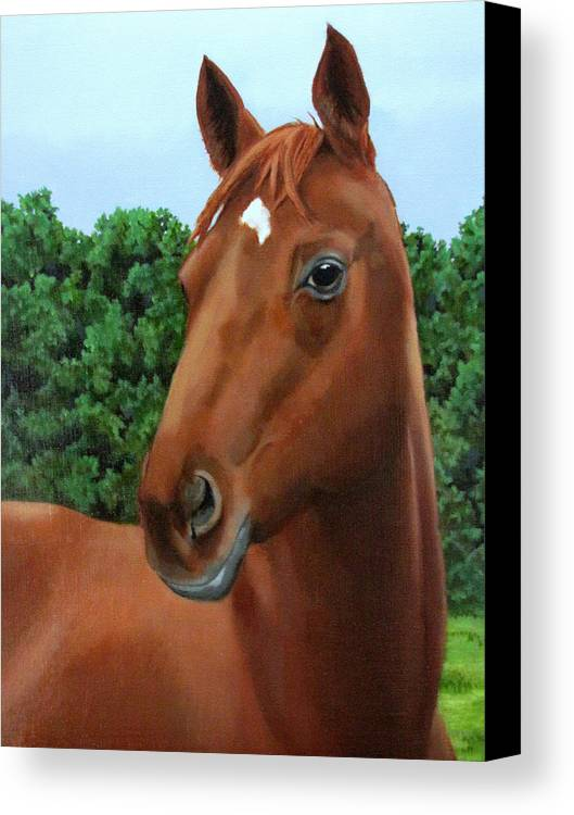 Horse Canvas Print featuring the painting Retired Racer by Sandra Chase