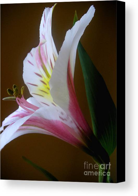 Nature Canvas Print featuring the photograph Alstroemeria - Responding by Lucyna A M Green