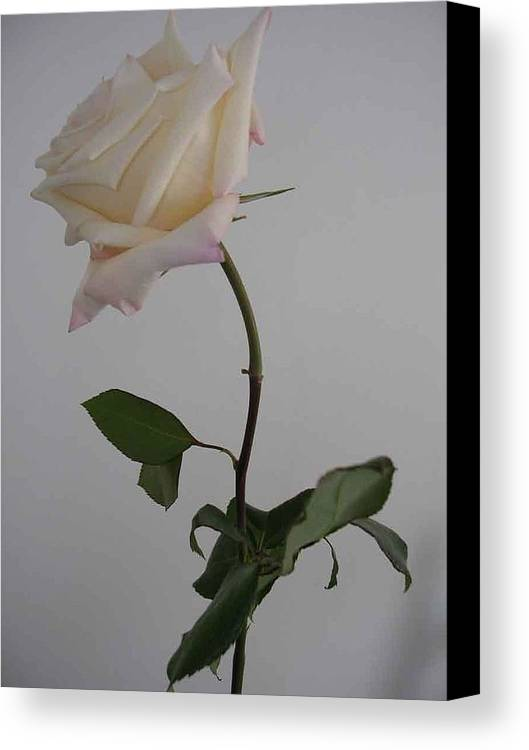 Floral Canvas Print featuring the photograph Anna Rose by Nancy Ferrier