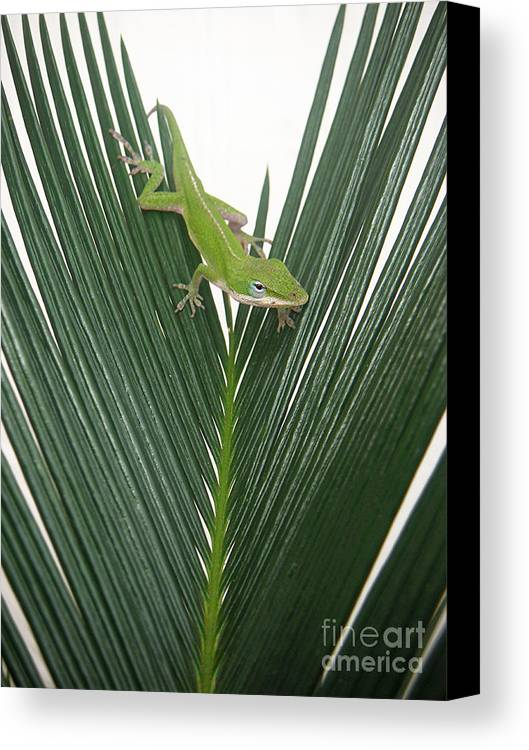Nature Canvas Print featuring the photograph Anole With Palm - Assertive by Lucyna A M Green