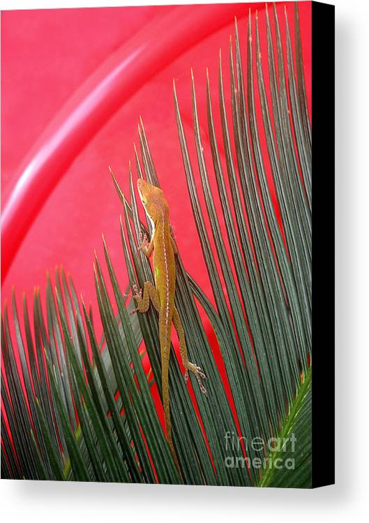 Nature Canvas Print featuring the photograph Anole With Palm - In The Red by Lucyna A M Green