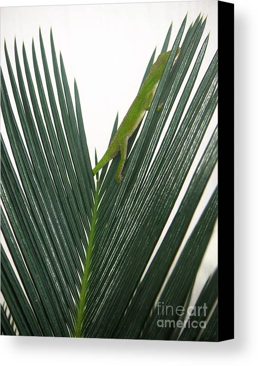 Nature Canvas Print featuring the photograph Anole With Palm - Shy by Lucyna A M Green
