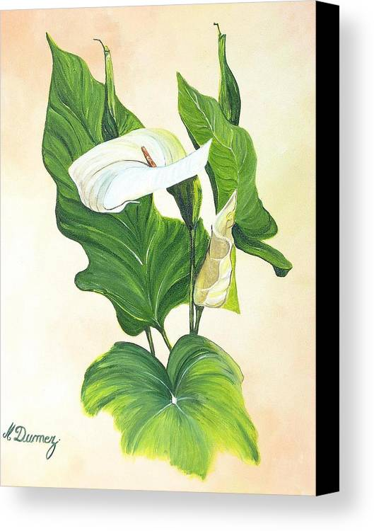 Flowers Canvas Print featuring the painting Arums by Murielle Hebert