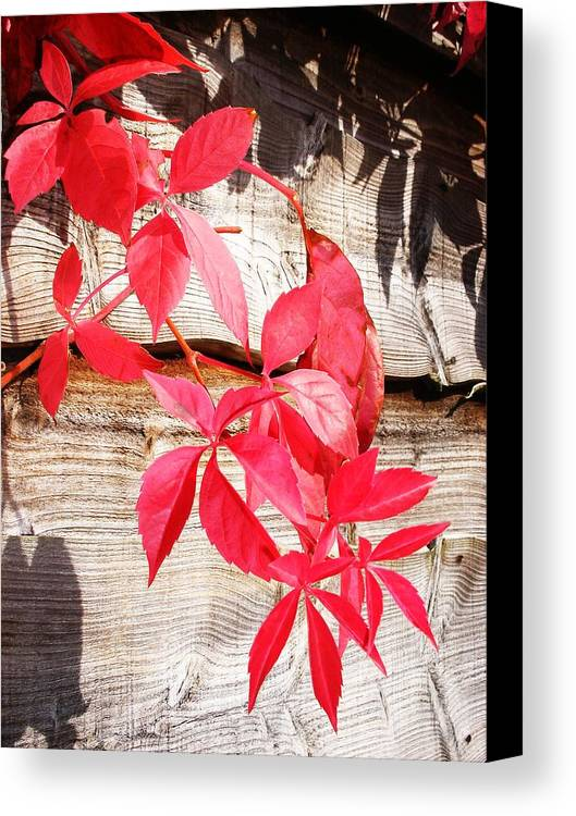 Image Canvas Print featuring the photograph Autumn Shadows by Lucia Del