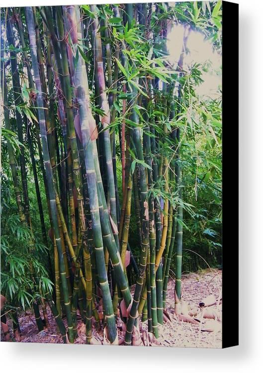 Bamboo Style. Canvas Print featuring the photograph Bamboo by Nereida Slesarchik Cedeno Wilcoxon