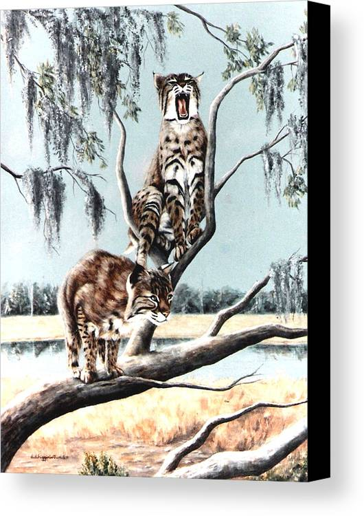 Bobcats Canvas Print featuring the painting Bayou Bobcats by DiDi Higginbotham