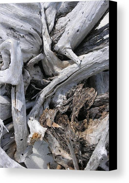 Driftwood Canvas Print featuring the photograph Beachwood by Jim Derks