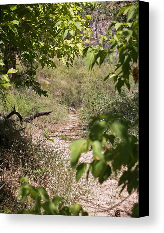Landscape Canvas Print featuring the photograph Beaten Path by James Granberry