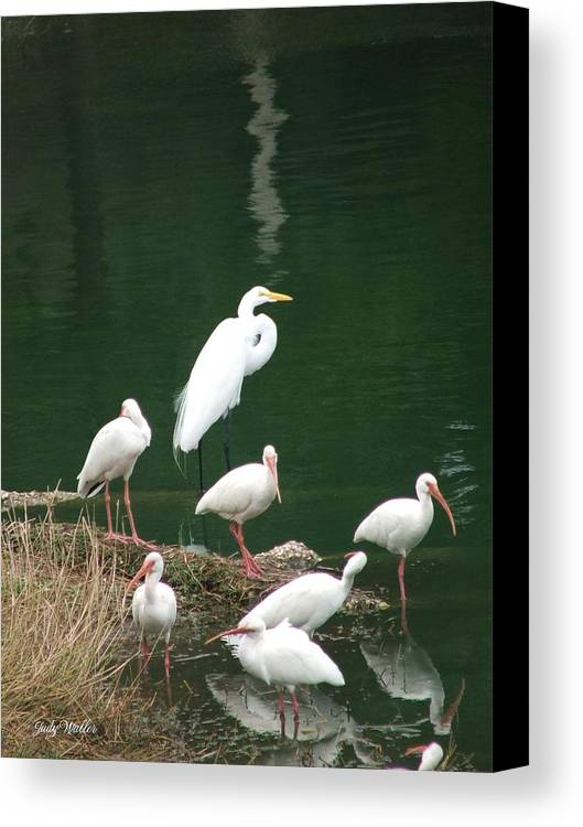 Birds Canvas Print featuring the photograph Birds On 17th Street Pond by Judy Waller