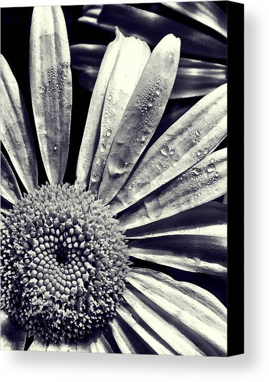 Daisy Canvas Print featuring the photograph Black And White Daisy by Kat J