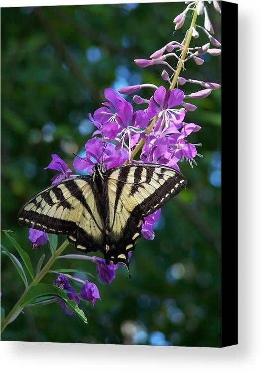 Butterfly Canvas Print featuring the photograph Butterfly by Gene Ritchhart