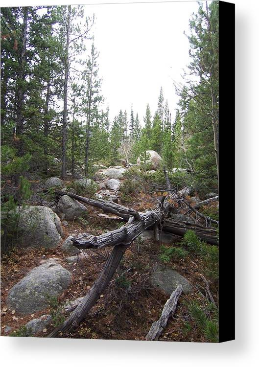 Landsscape Canvas Print featuring the photograph Colorado Trees by Lisa Gabrius