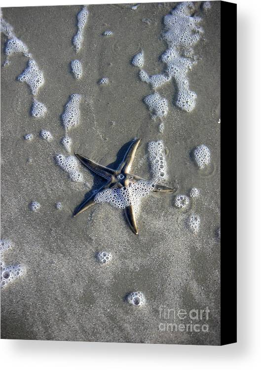 Nature Canvas Print featuring the photograph Creatures Of The Gulf - A Fallen Star by Lucyna A M Green
