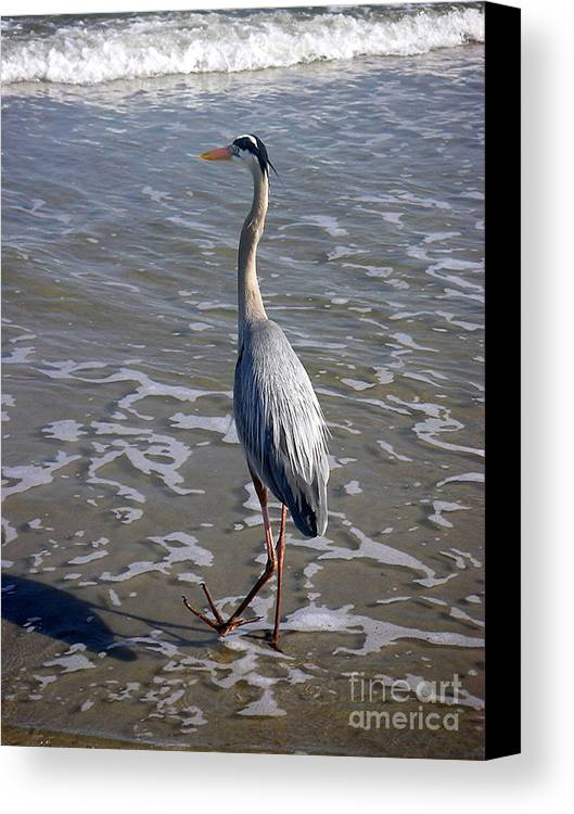 Nature Canvas Print featuring the photograph Creatures Of The Gulf - Advancing Slowly by Lucyna A M Green