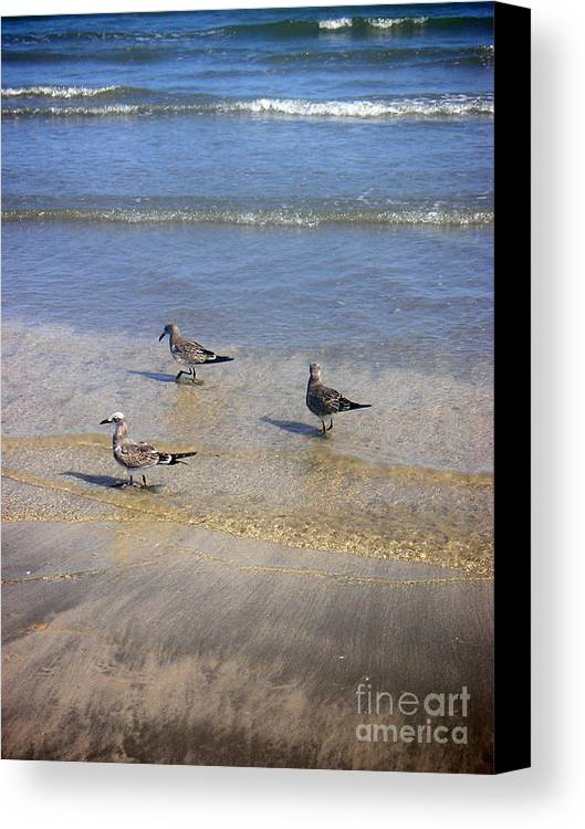 Nature Canvas Print featuring the photograph Creatures Of The Gulf - Morning Walk by Lucyna A M Green