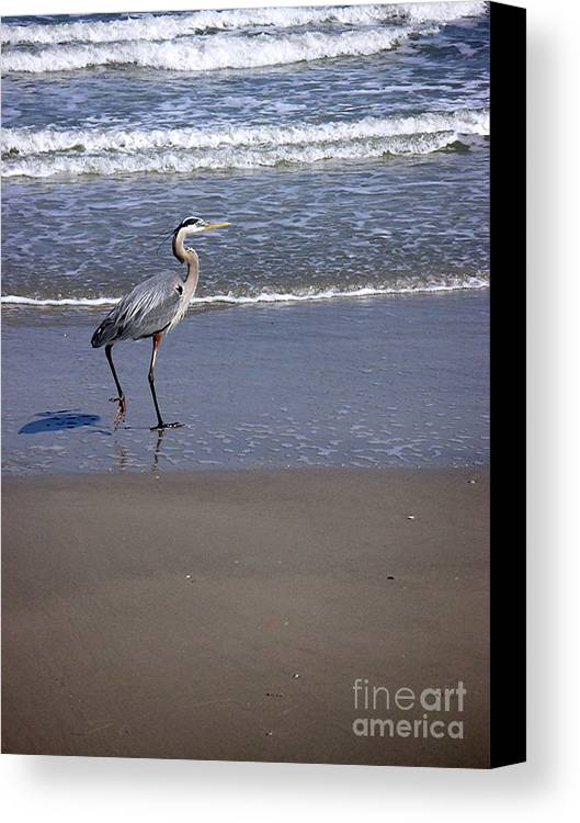 Nature Canvas Print featuring the photograph Creatures Of The Gulf - Walk This Way by Lucyna A M Green