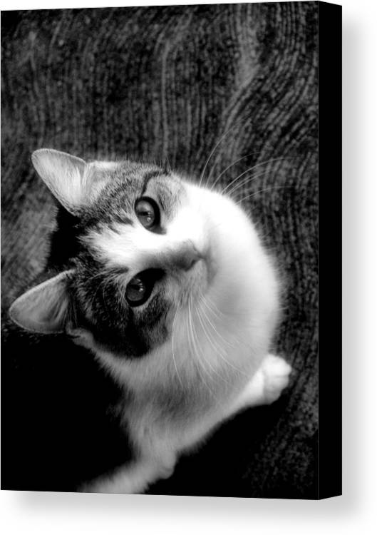Cat Canvas Print featuring the photograph Don't Ever Leave by Gaby Swanson