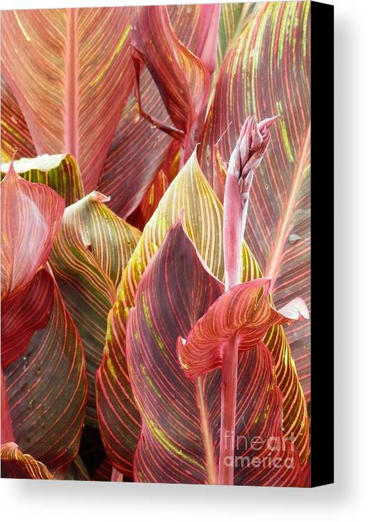 Garden Leaves Canvas Print featuring the photograph Extraordinary Foilage by L Cecka