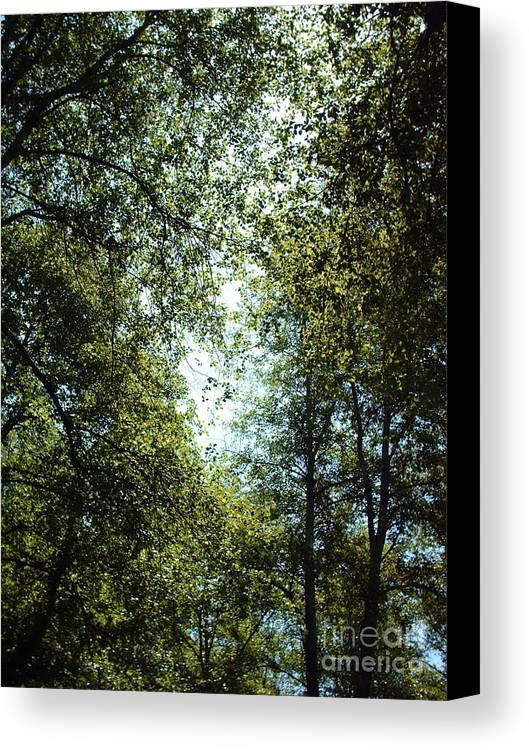 Trees Canvas Print featuring the photograph Guardians by Brian Edward Harris